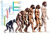 Hominin's and what They Did