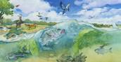 Bay ecosystem