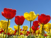Spring Roster Verification