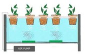 3 advantages of USING HYDROPONIC SYSTEM