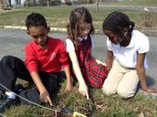 Third Grade Tulip Project