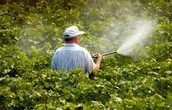 Why Might Farmers Want to Limit Pesticide Use?