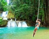 Nice jungle activities
