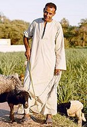 Who are the farmers in Egypt?