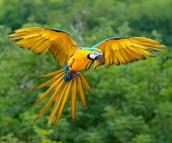 Sacar fotos de las animales de la selva