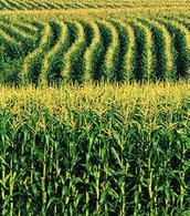 Biotech In Agriculture