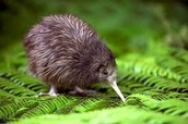 Codeword: Kiwi