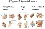 Synovial movable