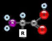 Аминокислоты (аминокарбоновые кислоты)
