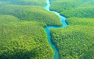 Bird's Eye View of the Amazon Rainforest