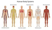 The 5 Human Body systems!