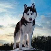 My Dog !!