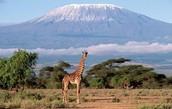 Mount Kilimanjaro🗻