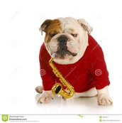 Hernandez Bulldog Band