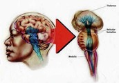 Location of brain stem