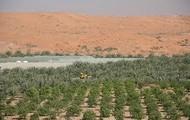 Plantations in Al-Ain