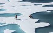 Sea ice.