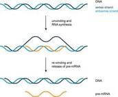 Making RNA