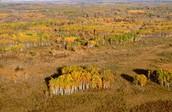 Tallgrass aspen parkland biome