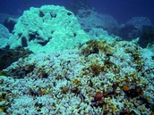 Ecology of Corals