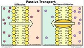 Osmosis and Diffusion are a type of Passive Transport.