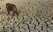 Major droughts