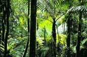 Tropisch regenwoudklimaat
