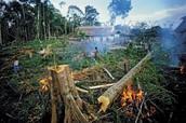 Rainforest : Nature Conservancy