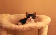 Adopt Precious!