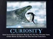 Week of June 1- Curiosity