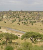 Savanne klimaat