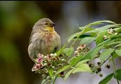 Future for Galapagos Finches