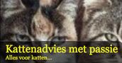 Kattenadvies iVZW