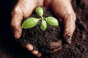 Rich Soil!