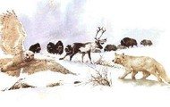 The animals of the tundra