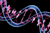 What do scientists use genetic engineering for?