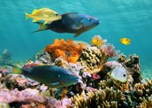 Beautiful fish that are in the sea