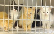 A couple of little kitties at an animal shelter
