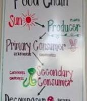 Anchor Chart - Food Chain