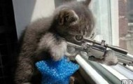 cat holding sniper rifle