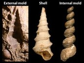 Are all fossils the same?