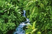 Tropischregenwoud klimaat