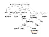 Austronesian Family