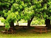 24 hectareas de verde