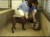 Animal Shelter Caretaker