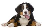 Perros y perritos
