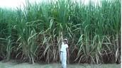 Netafim - Drip Irrigation Revolution