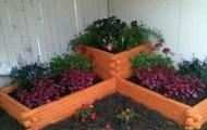 My first garden!