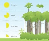 what are the layers of the rainforest?