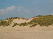 Groene duinen